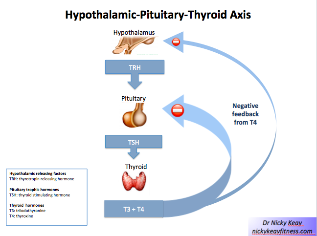 Thyroid Function In Athletes And Dancers Nicky Keay Fitness